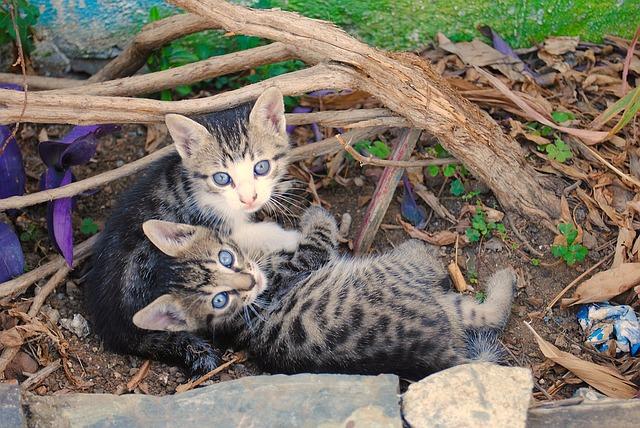 kittens-1170324_640